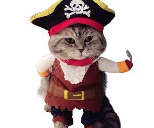 pirata-gato